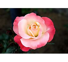 A Blushing Rose ~ Two Tone Beauty Photographic Print