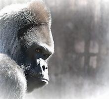 Ape Dream by Agro Films
