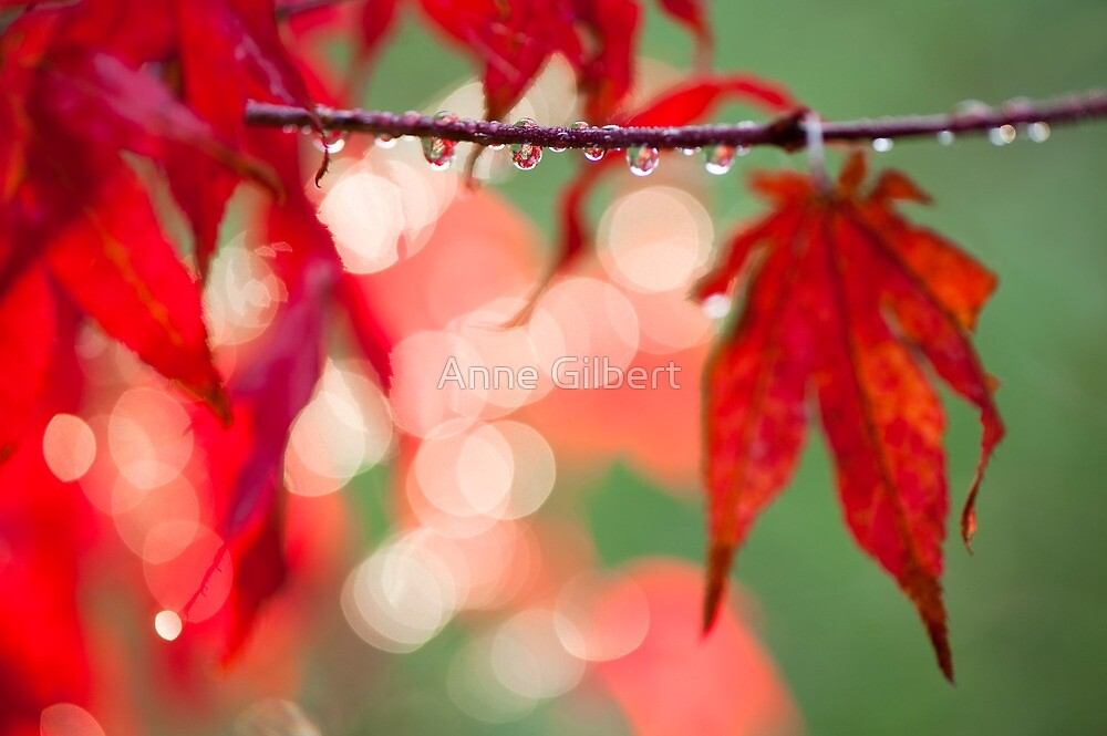 Line of Reflections by Anne Gilbert