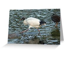 Ibis in a Pond Greeting Card