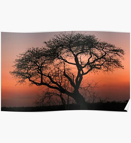 A Londolozi Sunset Poster