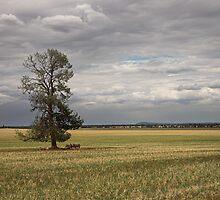 Binya Plains by David Haworth
