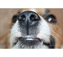 Wet Nose Photographic Print