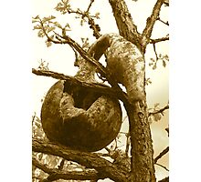 A Mouse House Gourd Photographic Print