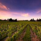 Vilagrad Winery by Aaron Radford
