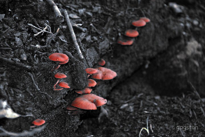 Selective colour - Fungi by gogston