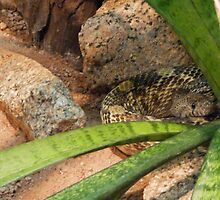 Arizona Rattler by 2HivelysArt