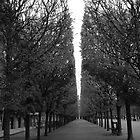 thunder trees by gstella