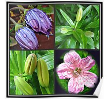 Early Summer Raindrops Floral Collage Poster