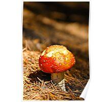 fungus, Cleland Bot. Garden Adelaide Poster