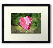Pink satin Framed Print