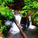Akaka falls trail by PJS15204