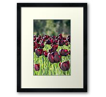Tulips en masse Framed Print