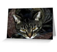 I just woke from a catnap...give me a few before you snap!!! Boo Romo ©  Greeting Card