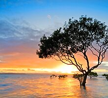 Mangrove Morning - Cleveland Qld Australia by Beth  Wode