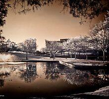 Reflections by Pene Stevens
