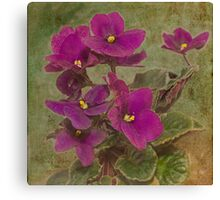 Purple African Violet Canvas Print