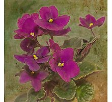 Purple African Violet Photographic Print