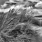 Dune Grass by Dave Tucker