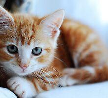 Ginger Kitten by Ailia