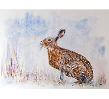 Hare (Jack Rabbit)  in a Snow Shower Photographic Print