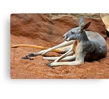 Relaxing Kangaroo Canvas Print