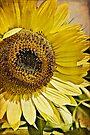A Burst of Sun by KBritt