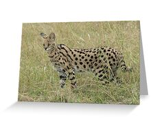 Funky Serval Greeting Card