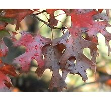 Season of Red and Green Photographic Print