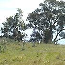 Crookwell Hills 1 by twawki