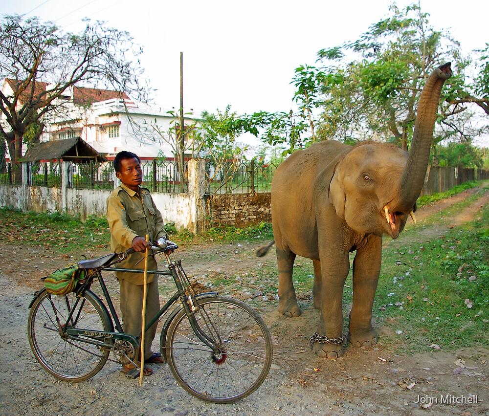 Baby elephant, Manas National Park, India. by John Mitchell