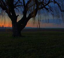The Willow Remains by Dale Lockwood