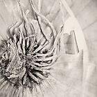 Onion by photojot