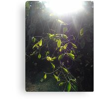 Fantasy celtic sun light leaves green woodland miracle elven fairy nature forest  Canvas Print