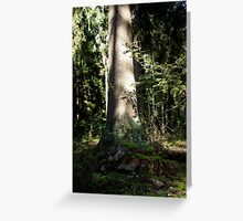 Forest Scenery Greeting Card