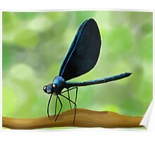 Black Winged Damselfly Original Painting Print Poster