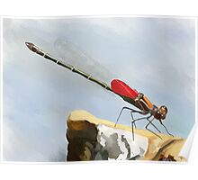 American Rubyspot Damselfly Painting Print Poster