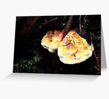 Colourful Mushroom on Dead Wood Greeting Card