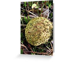 Mushroom Greeting Card