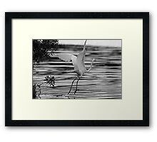 Bird taking off Framed Print