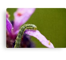 Insect World Canvas Print
