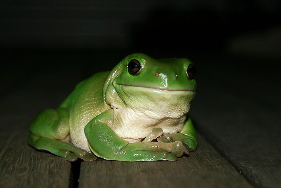 Green Tree Frog by Erland Howden