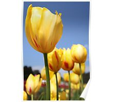 Tulip Me Yellow Poster