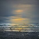 Fly Free by Charles & Patricia   Harkins ~ Picture Oregon