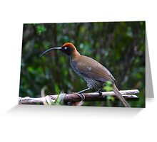 Sickle Bill Bird of Paradise, PNG Greeting Card