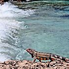 Iguana at beach by djphoto