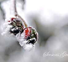 Frosted Berry Christmas by Gregoria  Gregoriou Crowe