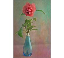 Winter Camellia Photographic Print