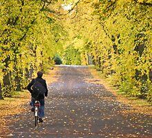 Autumn by Alex Chartonas