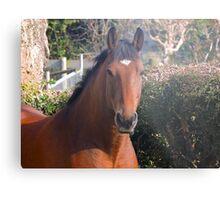 Henri the horse Metal Print